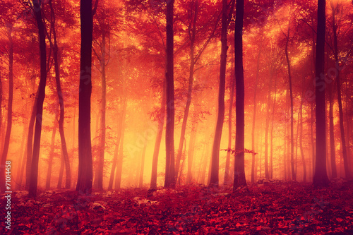 Red colored forest trees