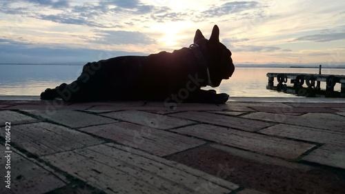 Foto op Plexiglas Franse bulldog Bulldog francés tumbado en el muelle