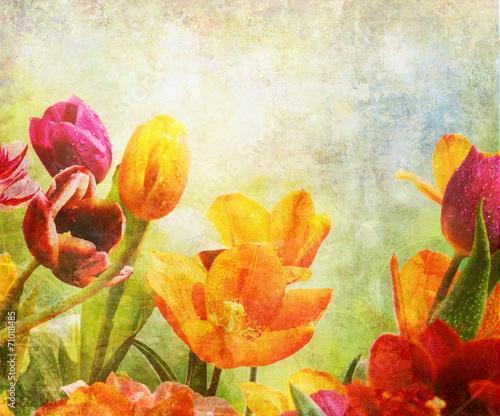 tulipany-kolorowe-krople-stare