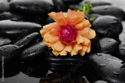 Poster Spa spa concept –orange ranunculus flower with wet stocks
