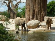 Bioparc Valencia Elefanti