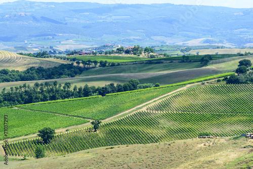 Foto op Canvas Olijf Landscape in Maremma