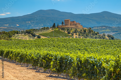 Fotografiet  Castle overseeing Vineyard in Rows at a Tuscany Winery Estate, I
