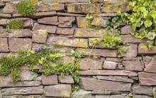 Old Cobblestone Wall Vegetation Background