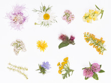 Wild Flowers On A White Background