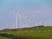 Wind Turbine And Birds