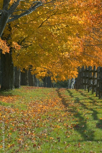 Autumn Trees © Vibe Images