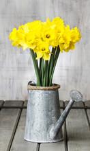 Daffodils In Silver Watering C...
