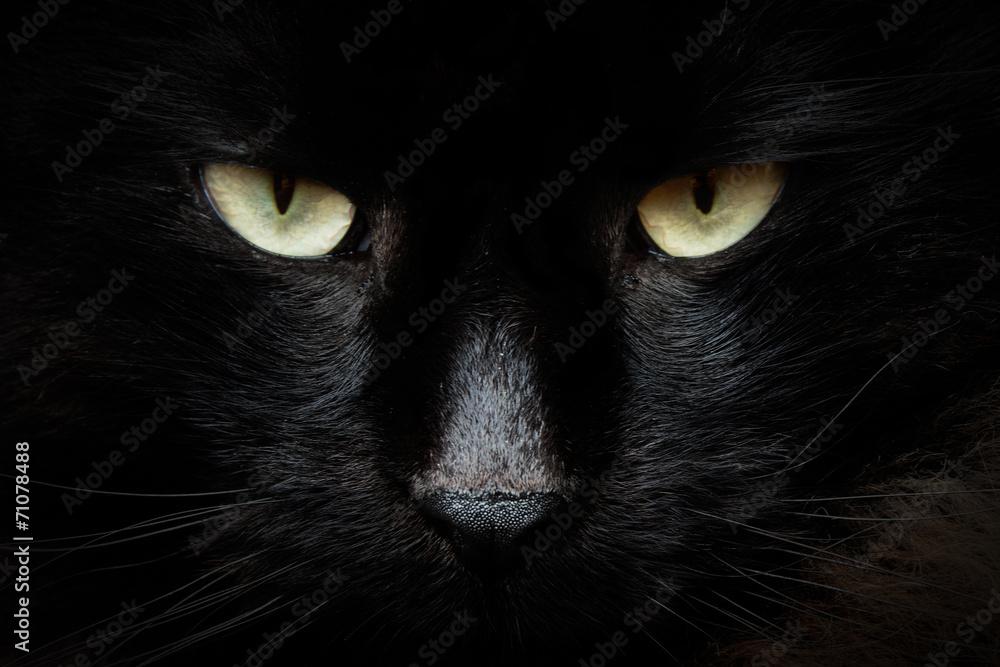 Fototapeta gatto nero