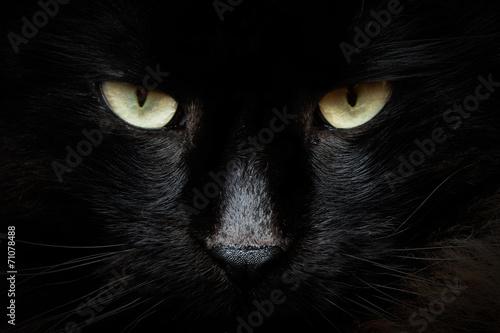 Fotomural gatto nero