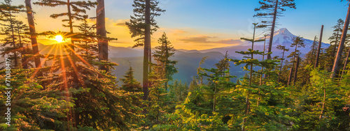 Photo Stands Trees Beautiful Vista of Mount Hood in Oregon, USA.
