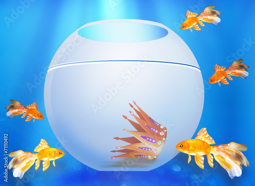 Photo  Five goldfishes look in an aquarium