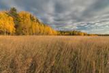 Golden autumn in the suburbs.