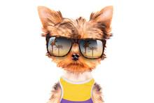 Tourist Dog