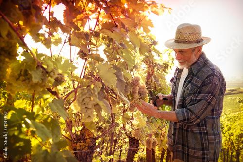 Wall Murals Vineyard Man working in a vineyard