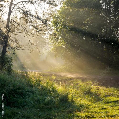 Foto auf Acrylglas Wald im Nebel The sun rays through the foliage