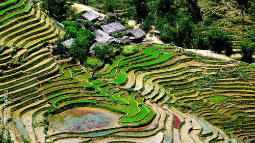 Poster Rijstvelden Vietnam