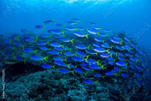 Papiers peints Sous-marin underwaterscape