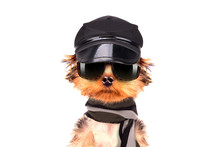 A Dog Wearing A Cap And Glasse...
