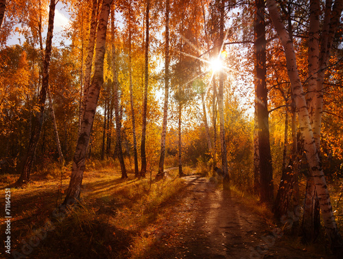 beautiful autumn background, sunset in forest