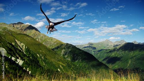 In de dag Eagle eagle