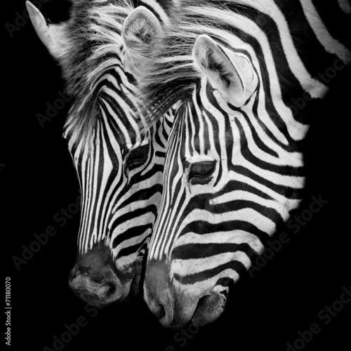 Staande foto Zebra A Headshot of a Burchell's Zebra