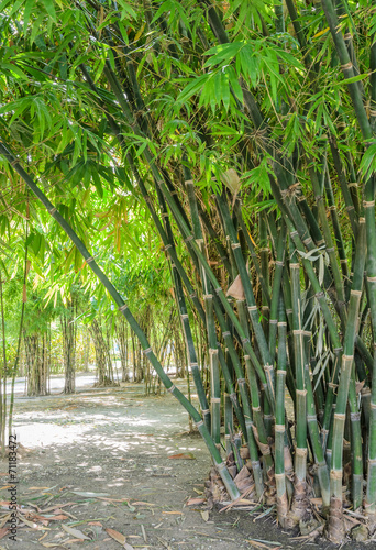 In de dag Bamboo Green bamboo forest