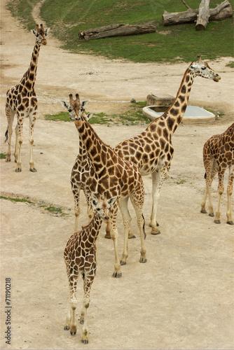 Fotografie, Obraz žirafy
