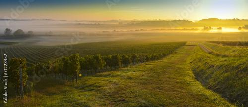 Photo sur Aluminium Vignoble Vineyard Sunrise