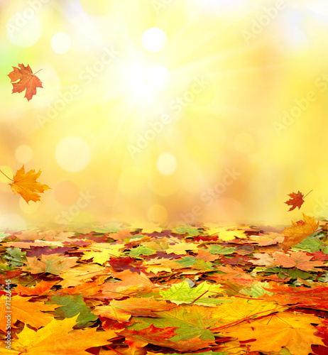 Stickers pour portes Orange eclat Autumn leaves