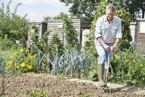 Senior Man Digging Vegetable Patch On Allotment Canvas Print