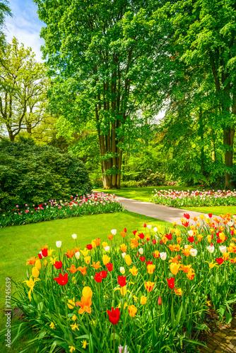 Fototapeta Garden in Keukenhof, tulip flowers and trees. Netherlands obraz na płótnie
