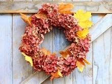Autumn Wreath Of Faded Hydrangea Flowers