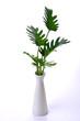 ferns leaf in vase