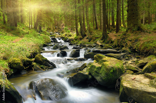 Canvas Green forest at spring time