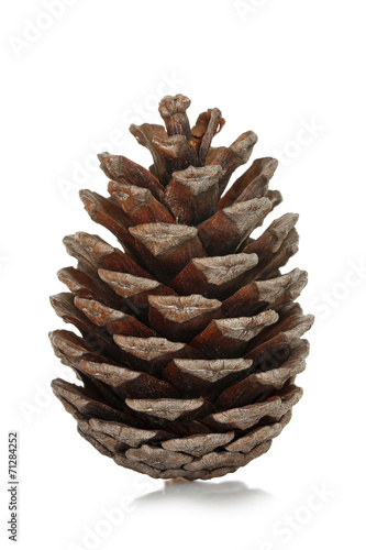 Fototapeta pine cone obraz