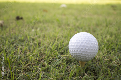 Deurstickers Golf golf ball on green grass