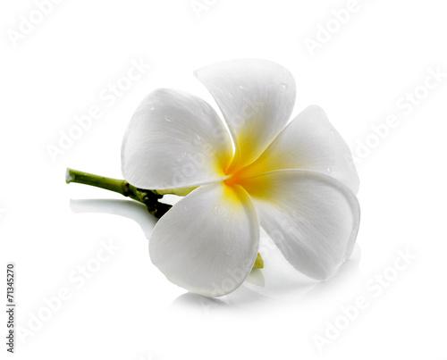 Fotografia, Obraz frangipani flower isolated white background