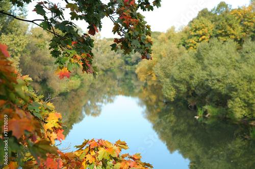 Foto op Canvas Bomen colorful foliage