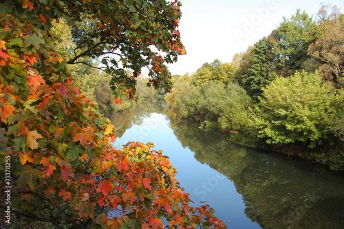 Foto op Canvas Bomen foliage