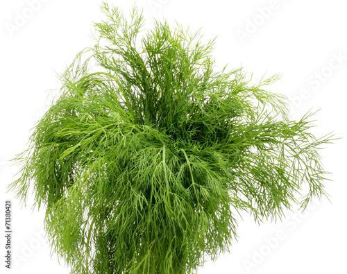 Garden Poster Plant koper