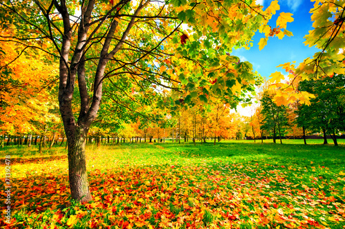 Photo Stands Melon Autumn landscape with colourful maple tree