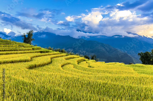 Tuinposter Rijstvelden Terraced rice field