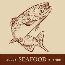 Trout Vector Detailed