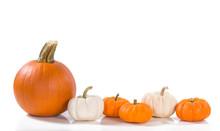 Pumpkins Against White Background