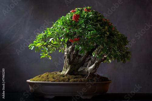 Foto op Aluminium Bonsai Pyracantha