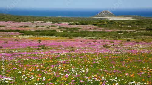 Foto op Plexiglas Zuid Afrika Wildflower Landscape