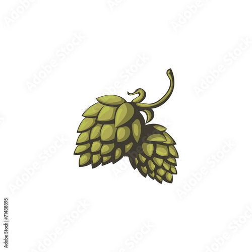 Fotografie, Obraz  Branch of hops on a white background