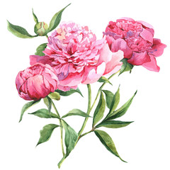 FototapetaPink peonies botanical watercolor illustration