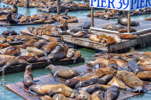 Keuken foto achterwand San Francisco Sea lions on pier 39 in San Francisco, USA.